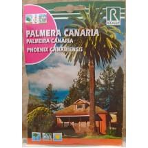 Rocalba | Palmera Canaria Semillas Samen der Kanarischen Dattelpalme Phoenix canariensis 10g